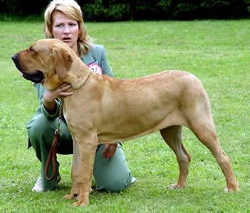 Европейская Надежда 2005 Лучший щенок сука Молоссклуба Австрии.