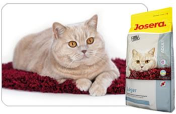 какой не сильно бьющий по бюджету корм для кота выбрать